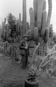 Garden Ideas Victoria Australia bendigo, victoria, australia in the early 1900s. | treasure family