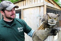 "Ashley, a great horned owl, clings to the glove of Willow Park Zoo employee Nick Cox during the ""What's New at the Zoo"""