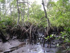 000203-fungos manguezais 3
