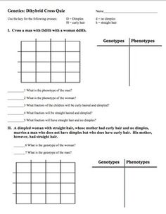 Genotypes and Square Worksheets Teaching Animal