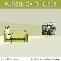 Cats: Where Cats Sleep