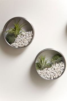 These mini wall terrariums look like they're made from the magnetic spice jars from Ikea! Might have to make some for the fridge :)