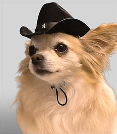 21 Best Pet Cowboys images  6f93af6d9534