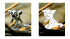 Baby Lemur coloring page Baby Lemur, Zoo Animal Coloring Pages, Zoo Animals, Colored Pencils, Activities, Art, Coloring, Colouring Pencils, Art Background