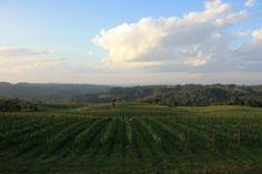 A região vinícola do Rio Grande do Sul pode se tornar a primeira região fora da Europa com a certificação de D.O. de espumantes