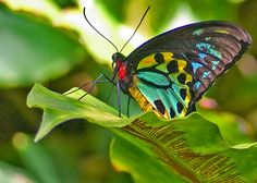 Tropical Butterfly by Steve Bailey on 500px