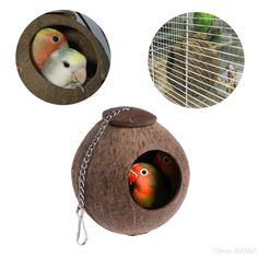 Parrot nest ,NNDA CO 1 Pc Natural Coconut Shell Bird Nest House Hut Cage Feeder Toy For Pet Parrot Budgie Parakeet Cockatiel Conure,Coconut Shell Metal ** Find out more about the great product at the image link. (This is an affiliate link) Parakeet Bird, Budgie Parakeet, Cockatiel, Budgies, Bird Toys, Cat Toys, Coconut Shell Crafts, Bird Breeds, Parrot Pet