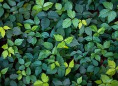 Is My Child's Poison Ivy Rash Contagious?