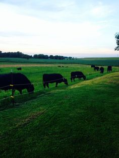 American Cattlemen compartió la foto de Kyle Weaver. - American Cattlemen
