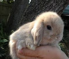 Image result for cute bunny
