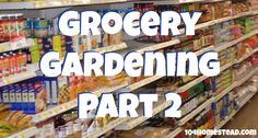 Grocery Gardening: Part 2 - A beautiful garden is just a pantry or fridge away. | The 104 Homestead