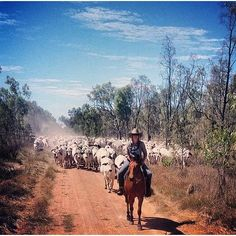 Country Life, Country Living, Country Roads, Mcleod's Daughters, South Australia, Farm Life, Cows, Cattle, Westerns