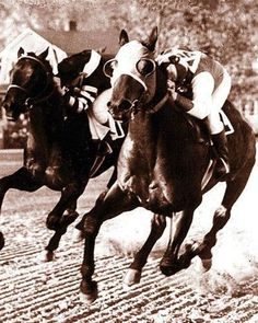 Sea Biscuit and War Admiral - War Admiral standing at only 15.3hh, Triple Crown winner in 1937. Man 'O' War, the father of War Admiral and grandsire of SeaBiscuit