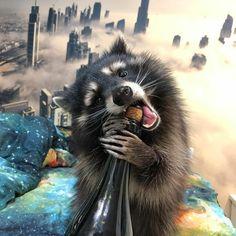 Raccoon Drawing, Baby Raccoon, Racoon, Cute Funny Animals, Cute Baby Animals, Animals And Pets, Dwarf Bunnies, Cute Animal Photos, Cute Creatures