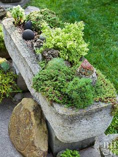 Load up a hypertufa trough with dwarf conifers, succulent sedums, and cascading groundcovers.
