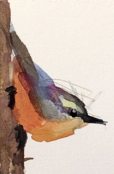 Nuthatch no. 32 original bird watercolor painting Angela Moulton ACEO Art #Impressionism
