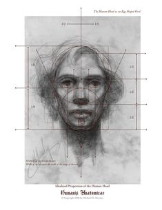 drawing the human head - Google Search