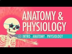 Introduction to Anatomy  Physiology: Crash Course AP №1 In this episode of Crash Course, Hank introduces you to the complex history and terminology of Anatomy  Physiology. By: Crash Course. Support on Subbable: subbable.com/...