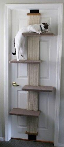Alternative moins encombrante qu'un arbre à chats. Voir les avis sur Amazon ici: http://amzn.to/2DxCBTq