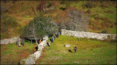 Xeira do MPG: Por terras de Covelo | Roteiros galegos