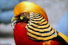 Bird like Pharaoh )