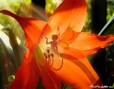 Fairy's in the Garden