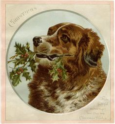 Lovely Christmas Dog Image! - The Graphics Fairy