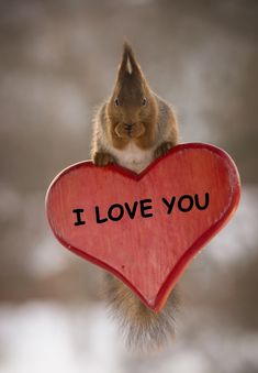"animal-photographies: ""red squirrel on a I love you heart "" Cute Squirrel, Baby Squirrel, Squirrels, Funny Squirrel Pictures, Funny Pictures, Cute Birthday Quotes, Cute Bunny Cartoon, Funny Animals, Cute Animals"
