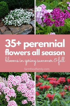 Every perennial gardener wants a showy display of flowers all season from spring to fall. Here's how to get it. Follow this guide for your best perennial garden yet. Best Perennials, Hardy Perennials, Flowers Perennials, Garden Inspiration, Garden Ideas, Backyard Ideas, Front Yard Landscaping, Landscaping Ideas, Gardening For Beginners