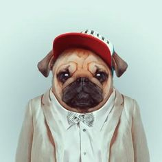 animals dressed as humans - Google Search