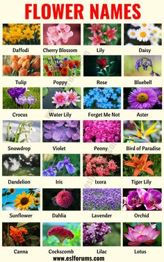 Flower Names: List of 25 Popular Types of Flowers with the Pictures - ESL Forums English Vocabulary Words, Learn English Words, List Of Flowers, List Of Flower Names, English Lessons For Kids, French Lessons, Spanish Lessons, Teaching Spanish, Flower Meanings