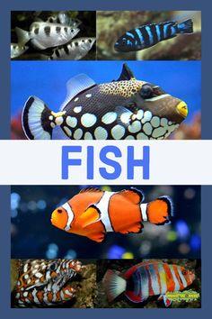 plenty of fish now