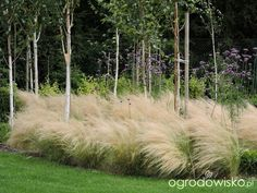 What You Can Do To Improve Your Landscaping using Garden Arbor Everyone that owns a home wants to take pride in it. Small Garden Arbour, Garden Arbor, Cottage Garden Design, Cottage Garden Plants, Modern Planting, Beautiful Home Gardens, Australian Garden, Natural Garden, Ornamental Grasses
