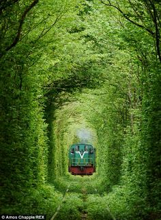 Klevan, Ukraine - this 3km section of private railway serves a nearby fibreboard factory. A train runs around thrice daily through the ethereal 'tunnel' - delivering wood to the factory. At other times the beautiful avenue of trees is witness  to a very different journey, for it is a favoured spot for young romantics to stroll with that special someone.