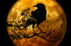 Crow Symbolism and Deeper Meaning of the Crow. The crow stands for so much, and it's symbolism is rich within every culture it is found. From magic to intelligence, mystery to mayhem the crow is a dilly of a totem. Find out more here. Halloween Images, Halloween Cookies, Halloween History, Halloween Wishes, Halloween Fabric, Halloween Festival, Wiccan, Witchcraft, Spirituality