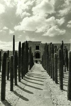 """Jardín Etnobotánico, """"Oaxaca de Juárez,"""" Oaxaca, México"""