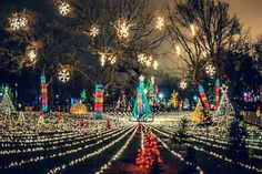Zoo Lights at Lincoln Park Zoo - Christmas in Chicago - Holiday Lights Travel Activities, Family Activities, Holiday Activities, Midwest Vacations, Zoo Lights, Chicago Events, Chicago Neighborhoods, Chicago Travel, My Kind Of Town