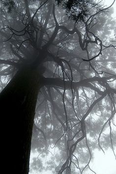 ☾ Midnight Dreams ☽ dreamy & dramatic black and white photography - tree Earth 3, Amazing Photography, Art Photography, All Nature, Nature Tree, Tree Of Life, Belle Photo, Beautiful World, Black And White Photography