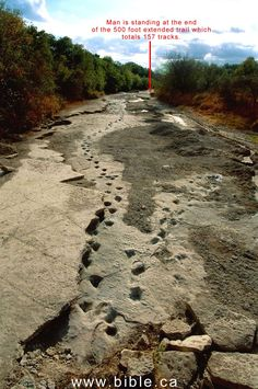 Dinosaur tracks in the riverbed of the Paluxy River near Glen Rose, Texas. Some of the tracks reveal human footprints right inside the dinosaur footprints!