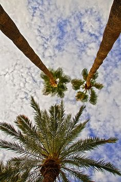 The view from my lounge chair in my backyard in AZ.  I guess I will always be homesick for AZ.