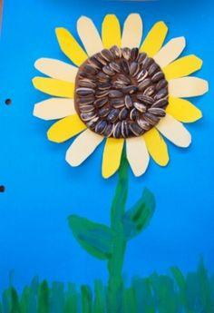 Tapa álbum con diferentes texturas. Dibujar un girasol con pipas. Original portada para trabajo escolar