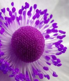 The Purple Flower Beautiful