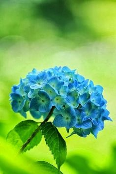 The most i like about flowers is that i always find new lovablel pictures