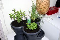 Mijn binnenhuis-moestuin & kruidentuintje! -
