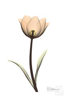 Albert Koetsier Tulip Drawing, Tulip Painting, Tulips In Vase, Tulips Flowers, Tulip Tattoo, Flower Tattoos, Watercolor Paper, Watercolor Paintings, Tulip Watercolor