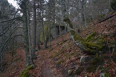Hayedo de la Senda del Bosque