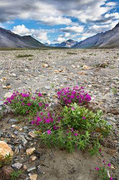 Las tundras comprenden las regiones Norte de Alaska, Canada y ...