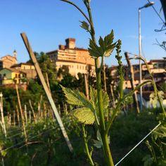 Barolo, Langhe, Piedmont Amazing Places, The Good Place