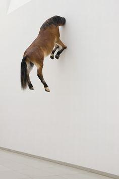 Maurizio Cattelan // Untitled, 2007, stuffed horse, natural dimensions, instakkation view, Museum fur Moderne Kunst, Frankfurt am Main