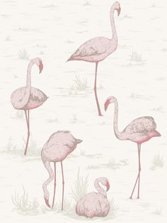 Cole and Son (Wallpapers) Ltd Cole & Son Tapeten Flamingos: Contemporary Restyled Pink Flamingo Wallpaper, White Wallpaper, Print Wallpaper, Fabric Wallpaper, Wallpaper Roll, Pink Flamingos, Pattern Wallpaper, White Flamingo, Tropical Wallpaper